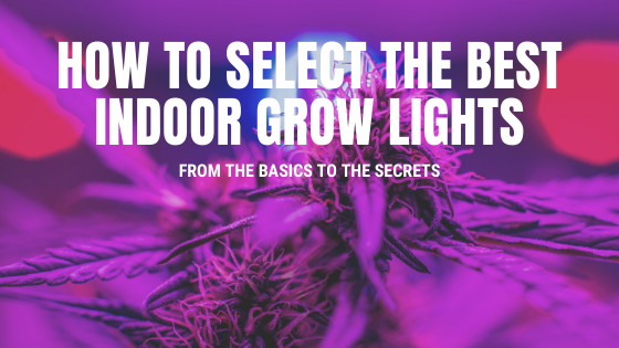 How to Select the Best Indoor Grow Lights