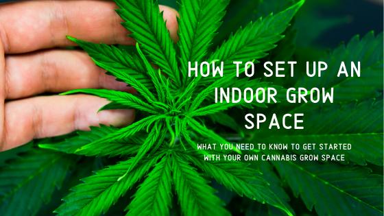 How To Start An Indoor Grow Space