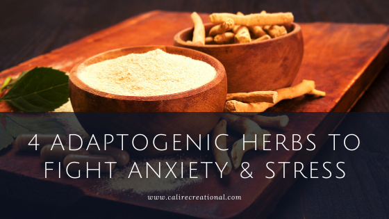 4 Adaptogenic Herbs to Fight Anxiety & Stress